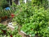 the-garden-June-2012-009