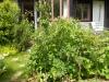 the-garden-June-2012-010